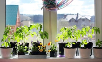 A Windowsill Garden.