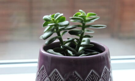 Health, Happiness and Houseplants: A How-To Guide